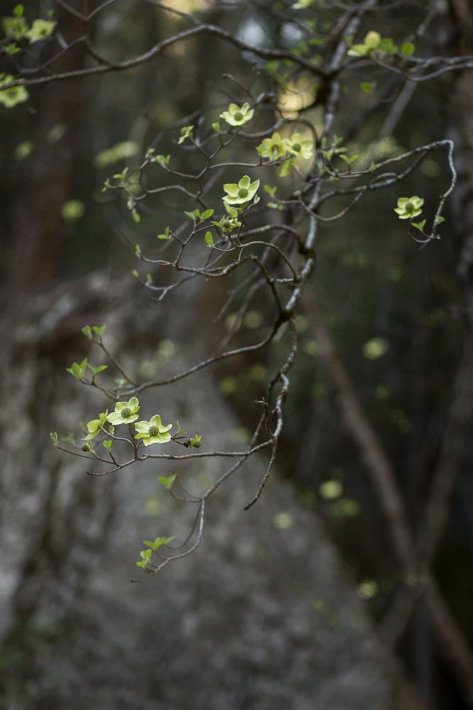 Yosemite-_H2A6897